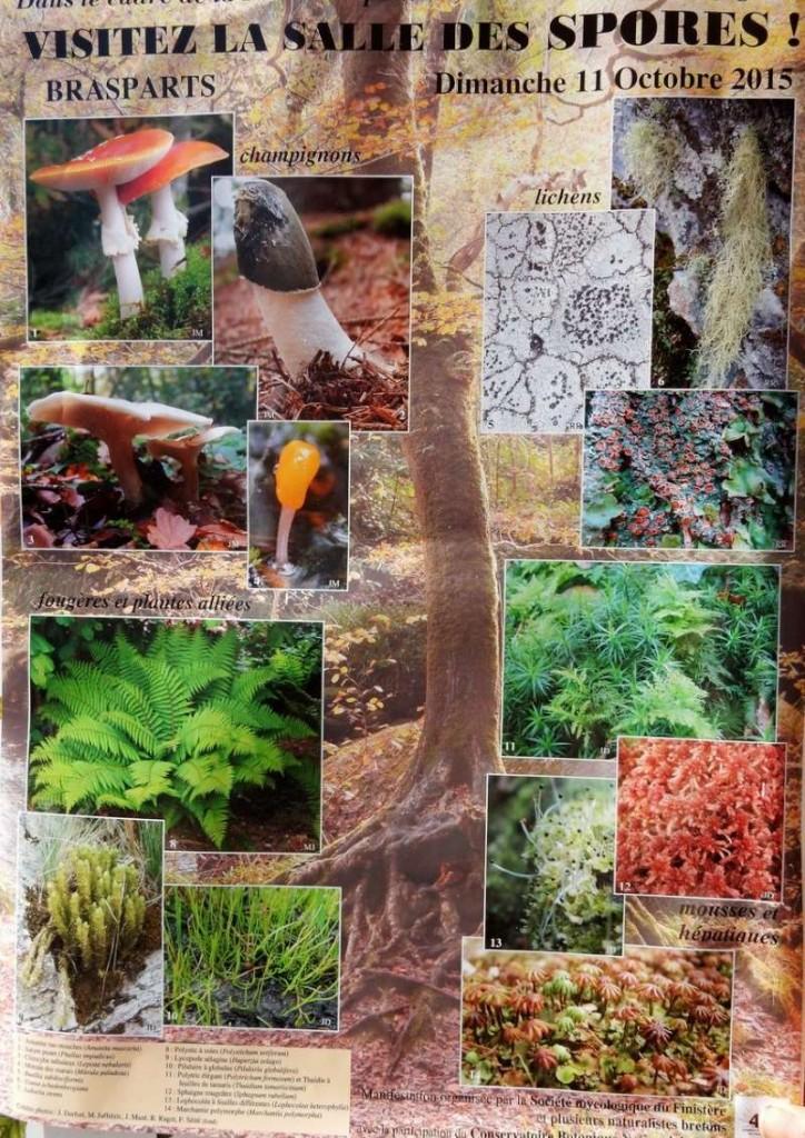 Fête des champignons brasparts 2015
