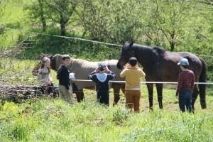 Carresse aux chevaux à la récrée, Ti Menez Are
