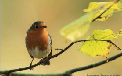Les 25 et 26 janvier, comptez les oiseaux des jardins !