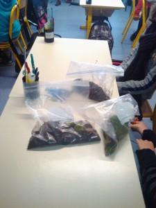 Tri et classement des échantillons de déchets biodégradables